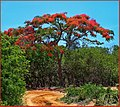 Merry Christmas from Madagascar - panoramio.jpg