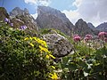 Mix mountain flowers - panoramio.jpg