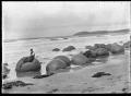 Moeraki boulders, circa 1925. ATLIB 292318.png