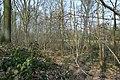 Motte op de Butsberg te Tielt-Winge - 372382 - onroerenderfgoed.jpg