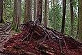 Mount Seymour Provincial Park, BC (DSCF8557).jpg