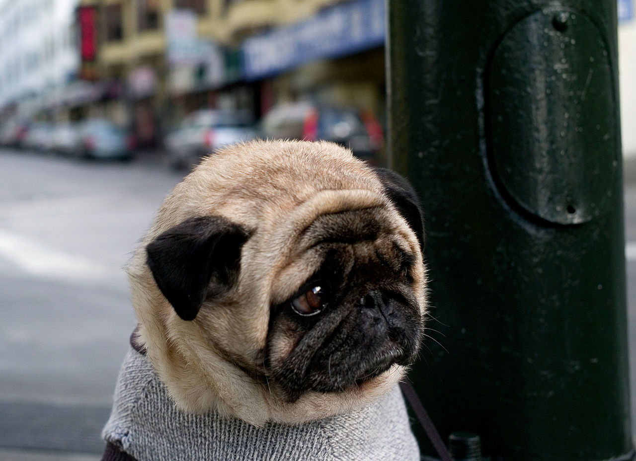 Funny Grumpy Dog Pictures