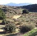 Mt. San Jacinto from Oakmont Park, Redlands 1-2012 (6808546607).jpg