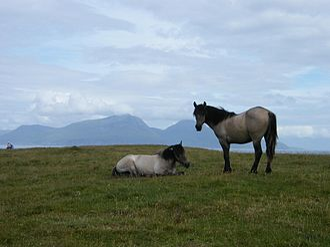 Muck, Scotland - Ponies on Muck