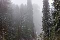 Murree scenic beauty.jpg