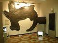 Museo Fossili Besano 4.jpg