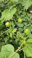 My garden plants 86.jpg