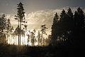 Mystischer Sonnenaufgang im nördlichen Waldviertel.jpg