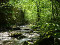 Nacionalen park Mavrovo (27).JPG