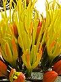 Nahaufnahme der Blüte von Agave parryi var. couesii in Jerome, Arizona.jpeg