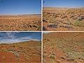 Namibia (10.3897-afrinvertebr.59.30684) Figures 1–4.jpg
