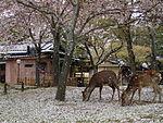 Nara Japan 1.jpg
