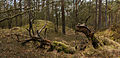 Nationaal Park Drents-Friese Wold. Locatie Dieverzand. Dode boom, belangrijke voedselbron in evenwichtig biotoop 02.jpg