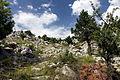 National park Paklenica in 2014 (3).JPG