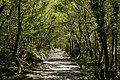National park Paklenica in 2014 (5).JPG