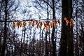 Nationalpark Bayerischer Wald 6.jpg