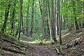 Nationalpark Hainich (6).jpg