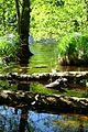 Nationalpark Jasmund - Modderstubben (3).jpg