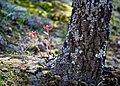 Natural Falls State Park 18.jpg