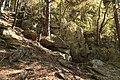 Natural monument Zabrdská skala in 2011 (15).JPG