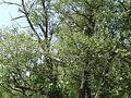 Naturschutzgebiet Heuckenlock 21.05.2014 40.JPG