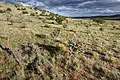 Near Big Pine Canyon - Flickr - aspidoscelis (1).jpg