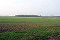 Near Brocklesby - geograph.org.uk - 65571.jpg