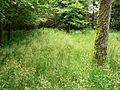 Neuschloss Königskrug Grasfläche.jpg