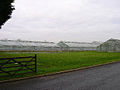 Newlands Nursery, near Runcton - geograph.org.uk - 93948.jpg