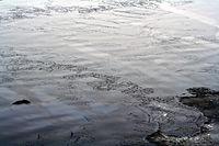 Nilas sea ice 3.jpg
