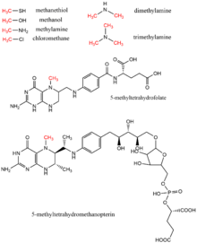 Methyltransferase - Wikipedia