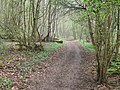 North Downs Way in Birches Wood - geograph.org.uk - 1254186.jpg