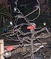 Nyíregyháza Zoo - Birds.jpg