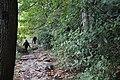 Ohiopyle State Park River Trail - panoramio (21).jpg