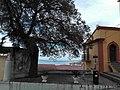 Olmo Terravecchia1.jpg