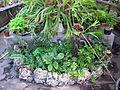 Orto botanico, fi, serretta bromeliacee 03.JPG