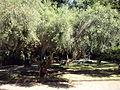 Orto botanico di Napoli 71.jpg