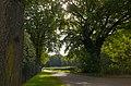 Oude bomen - panoramio.jpg