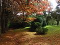 Outono verde.JPG