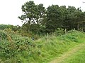 Overgrown railway cutting - geograph.org.uk - 1319325.jpg