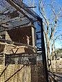 Owl at Drumlin Farm Wildlife Sanctuary of Audubon Society in Lincoln Massachusetts.jpg