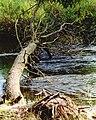POL SŁupia (rzeka) Bydlino-1.jpg