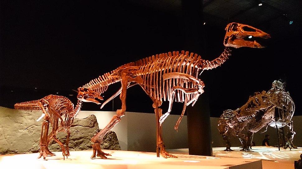Paleo Hall at HMNS Edmontosaurus
