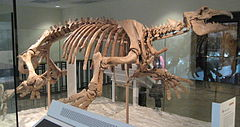 Paleoparadoxia Natural History Museum of Los Angeles County 20110330.jpg
