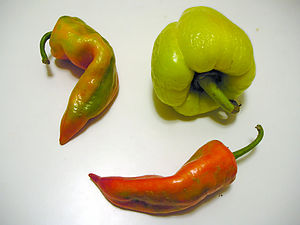 Paprika - The various shapes and colors of the peppers used to prepare paprika