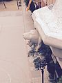 Parc Guell, sculpture.jpg