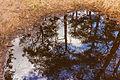 Park Drents-Friese Wold. Locatie Dieverzand. Modderpoel op zandpad 03.jpg