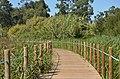 Passadiços da Lagoa de Paramos-Barrinha de Esmoriz XV (36881474542).jpg