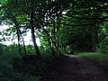 Path in Park House Plantation - geograph.org.uk - 487870.jpg