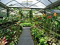 Penang Botanic Gardens (42).JPG